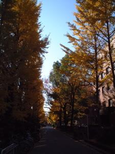 kyoto-u.jpg